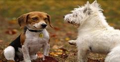 כתבה על עיריית קריית ביאליק במבצע אכיפה נגד צואת הכלבים ושוטטות